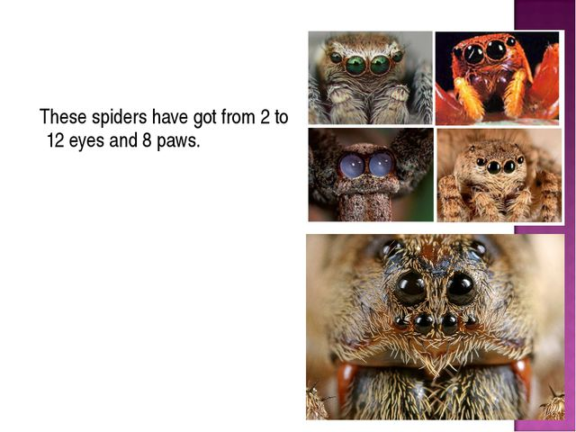 These spiders have got from 2 to 12 eyes and 8 paws.