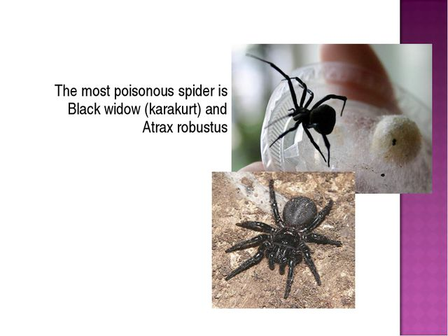 The most poisonous spider is Black widow (karakurt) and Atrax robustus