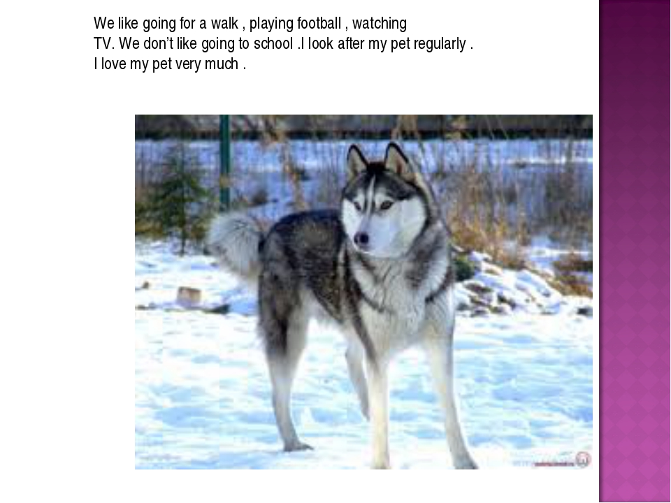 We like going for a walk , playing football , watching TV. We don't like goin...