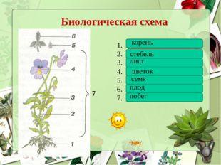 Биологическая схема ____________________ ____________________ _______________