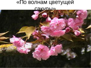 «По волнам цветущей сакуры»