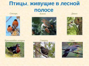 Птицы, живущие в лесной полосе Снегирь Клест Дятел Краснозобая казарка Скворе