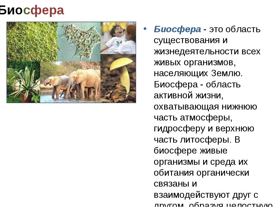 Биосфера Биосфера - это область существования и жизнедеятельности всех живых...