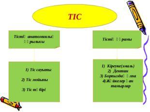 ТІС Тістің анатомиялық құрылысы Тістің құрамы 1) Тіс сауыты 2) Тіс мойыны 3)