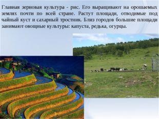 Главная зерновая культура - рис. Его выращивают на орошаемых землях почти по