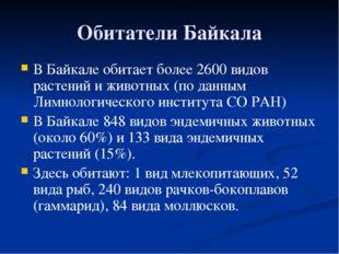 Обитатели Байкала В Байкале обитает более 2600 видов растений и животных (по