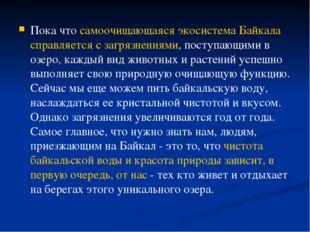 Пока что самоочищающаяся экосистема Байкала справляется с загрязнениями, пост