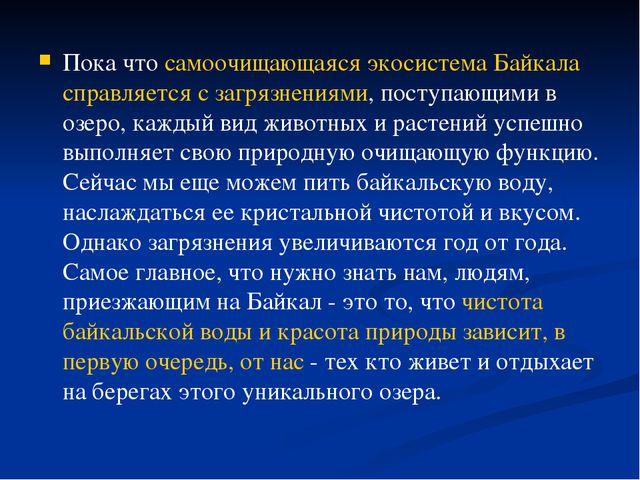 Пока что самоочищающаяся экосистема Байкала справляется с загрязнениями, пост...