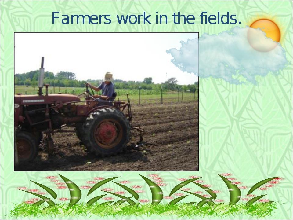 Farmers work in the fields.