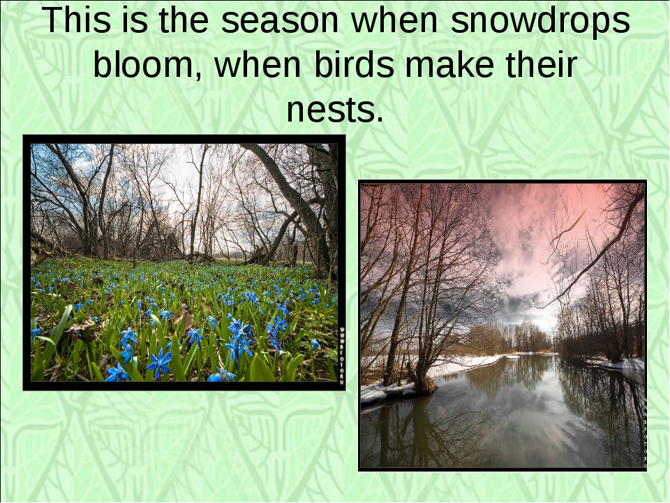 This is the season when snowdrops bloom, when birds make their nests.