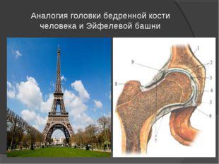 Аналогия головки бедренной кости человека и Эйфелевой башни