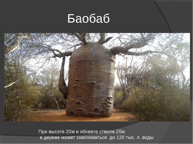 Баобаб При высоте 20м и обхвате ствола 20м в дереве может скапливаться до 120...