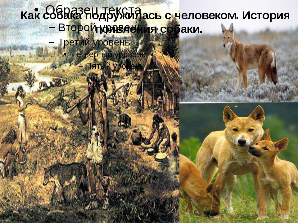 Как собака подружилась с человеком. История появления собаки.