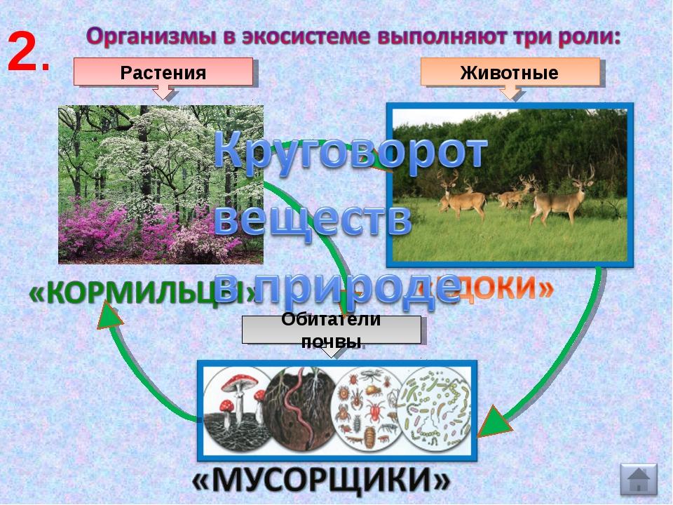 Растения Животные Обитатели почвы 2.