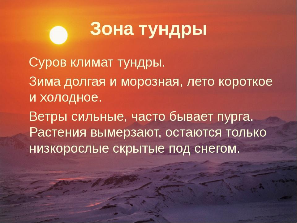 Зона тундры Суров климат тундры. Зима долгая и морозная, лето короткое и холо...