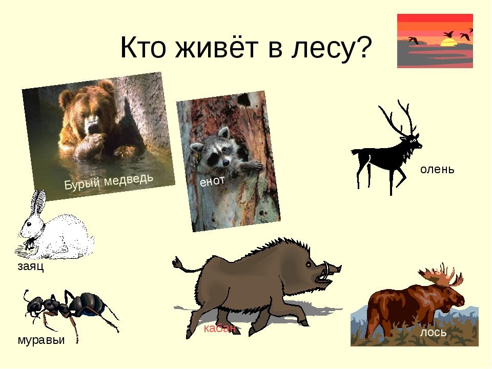 Кто живёт в лесу? Бурый медведь кабан лось заяц енот муравьи олень