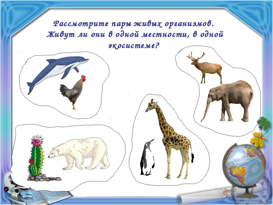 Рассмотрите пары живых организмов. Живут ли они в одной местности, в одной эк...