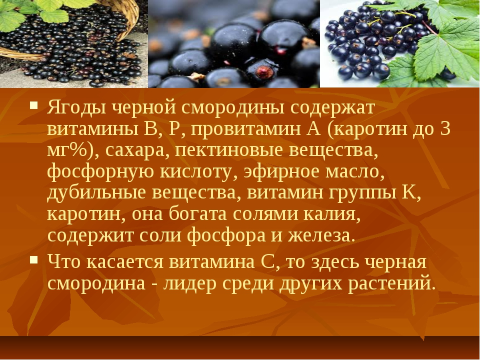 Ягоды черной смородины содержат витамины В, Р, провитамин А (каротин до 3 мг%...