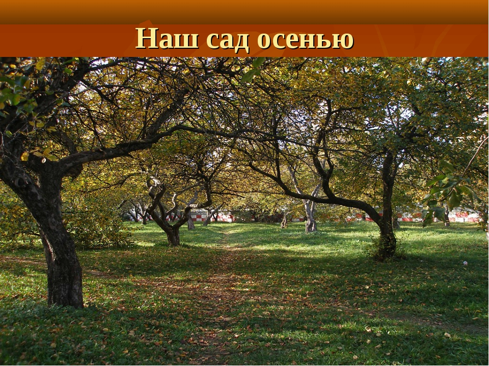 Наш сад осенью