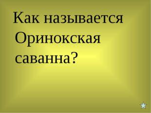 Как называется Оринокская саванна?