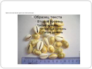 """Одними из самых первых """"денежных единиц"""" в мире считаются раковины каури"""