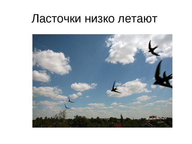 Ласточки низко летают