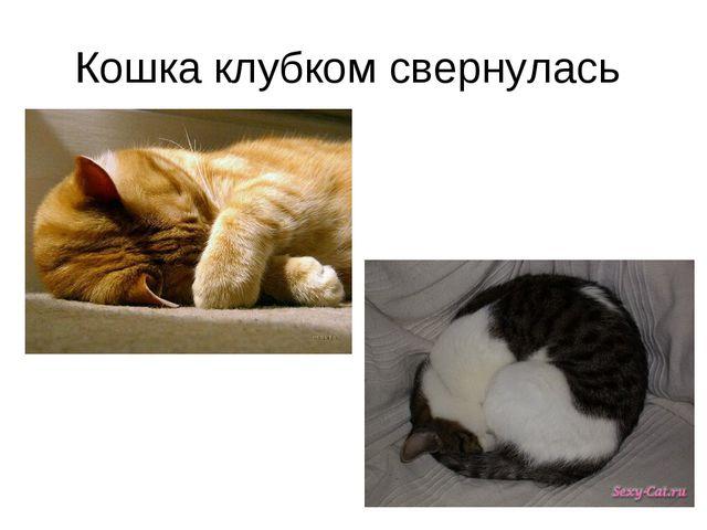 Кошка клубком свернулась