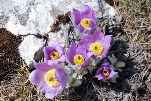 http://crimea-tourism.com/uploads/posts/2012-10/1351160737_rastitelnyy-mir-stepnogo-kryma.jpg