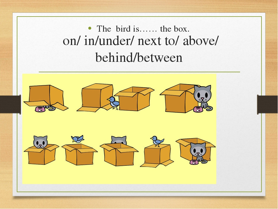 on/ in/under/ next to/ above/ behind/between The bird is…… the box.