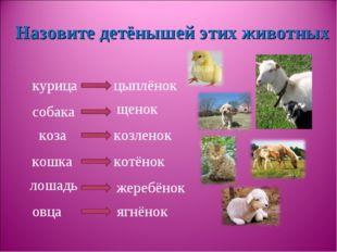 курица собака коза кошка лошадь овца Назовите детёнышей этих животных цыплёно