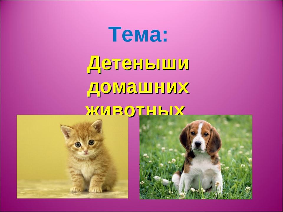 Тема: Детеныши домашних животных