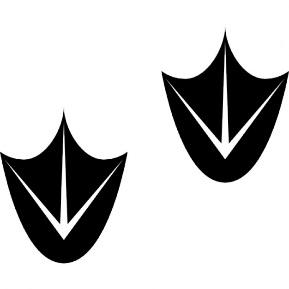 https://image.freepik.com/free-icon/goose-footprints_318-38445.jpg