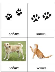 Следы собаки и следы кошки