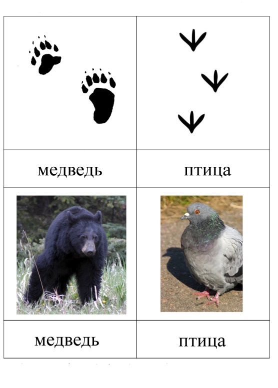 Следы медведя следы птицы