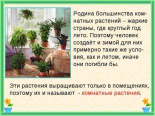 Родина большинства ком- натных растений – жаркие страны, где круглый год лет