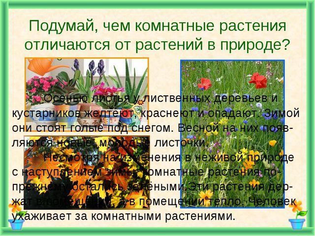 Подумай, чем комнатные растения отличаются от растений в природе? Осенью лис...