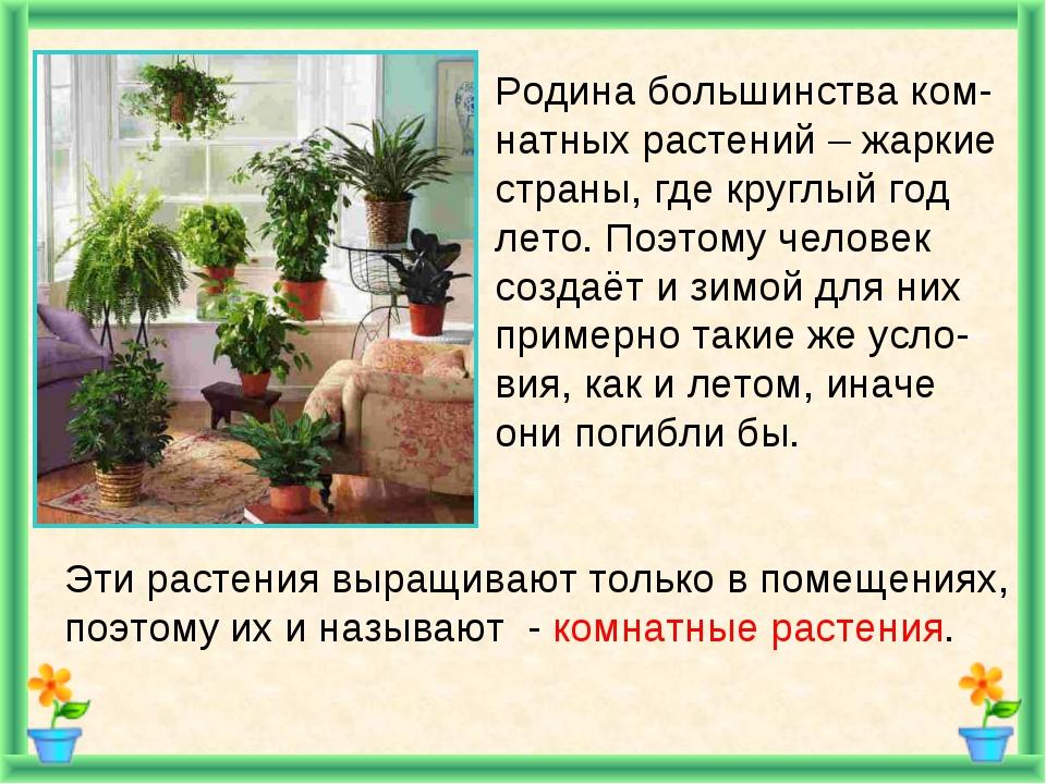 картинки комнатных растений в презентации важен правильный