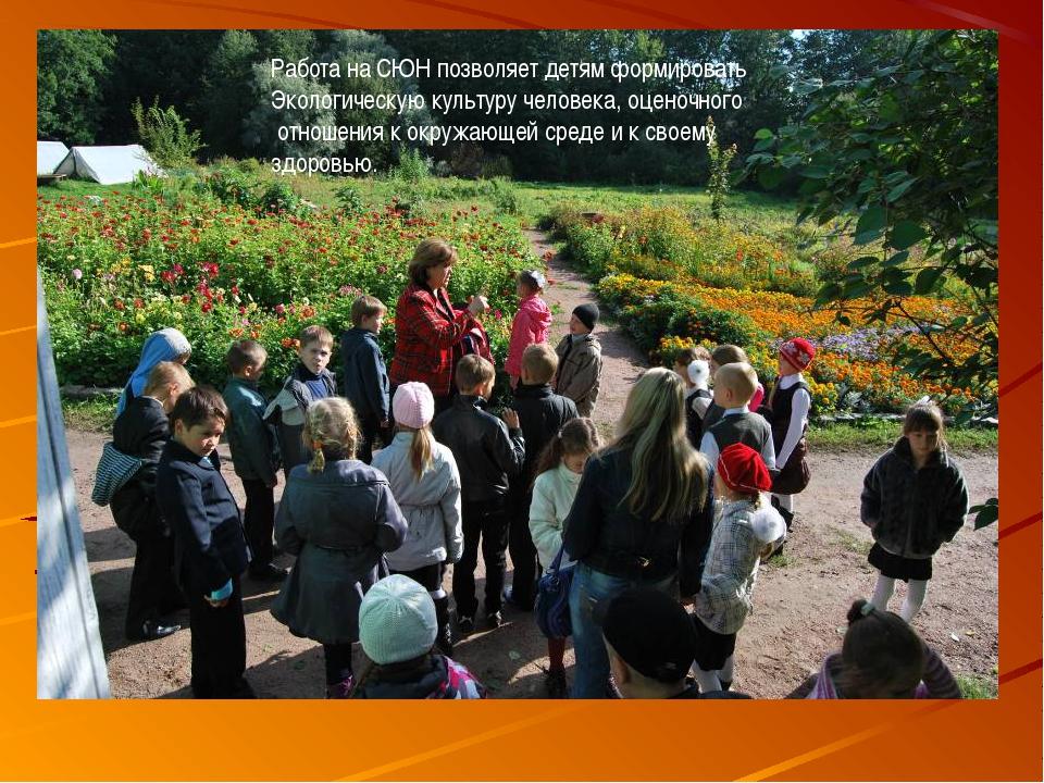 Работа на СЮН позволяет детям формировать Экологическую культуру человека, оц...