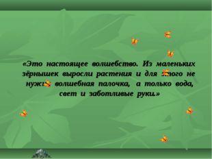 «Это настоящее волшебство. Из маленьких зёрнышек выросли растения и для этого