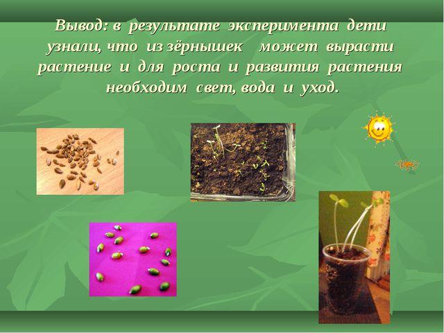Вывод: в результате эксперимента дети узнали, что из зёрнышек может вырасти р...