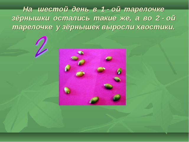 На шестой день в 1 - ой тарелочке зёрнышки остались такие же, а во 2 - ой тар...