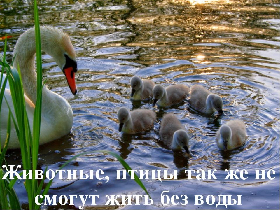 Животные, птицы так же не смогут жить без воды