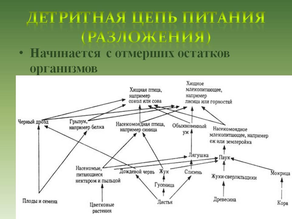http://pwpt.ru/uploads/presentation_screenshots/fe8fc42632d3498a025a4430b989ddab.JPG