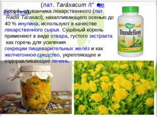 Одува́нчик(лат.Taráxacum/təˈræksəkʉm/) Корень одуванчика лекарственного (