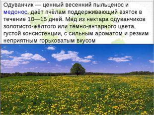 Одуванчик— ценный весенний пыльценос имедонос, даётпчёламподдерживающий в