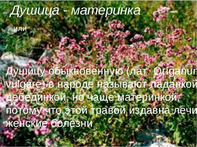Душица - материнка Душицу обыкновенную (лат. Oríganum vulgáre) в народе назыв...