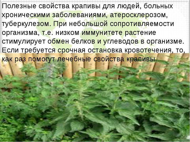 Полезные свойства крапивы для людей, больных хроническими заболеваниями, атер...