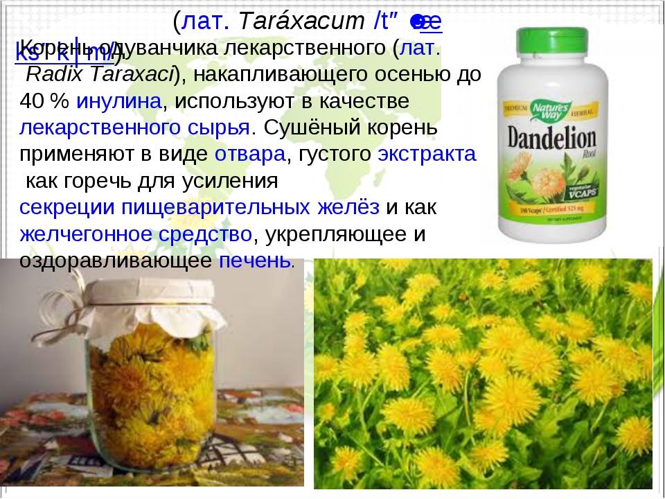 Одува́нчик(лат.Taráxacum/təˈræksəkʉm/) Корень одуванчика лекарственного (...