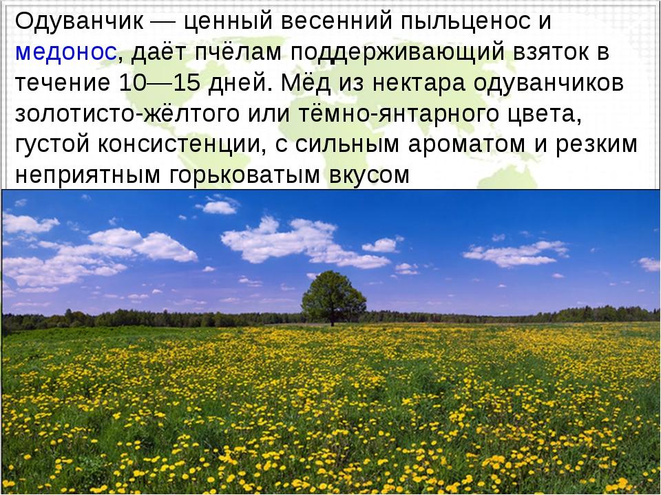 Одуванчик— ценный весенний пыльценос имедонос, даётпчёламподдерживающий в...