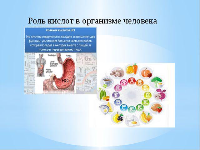 HCL Роль кислот в организме человека HCl